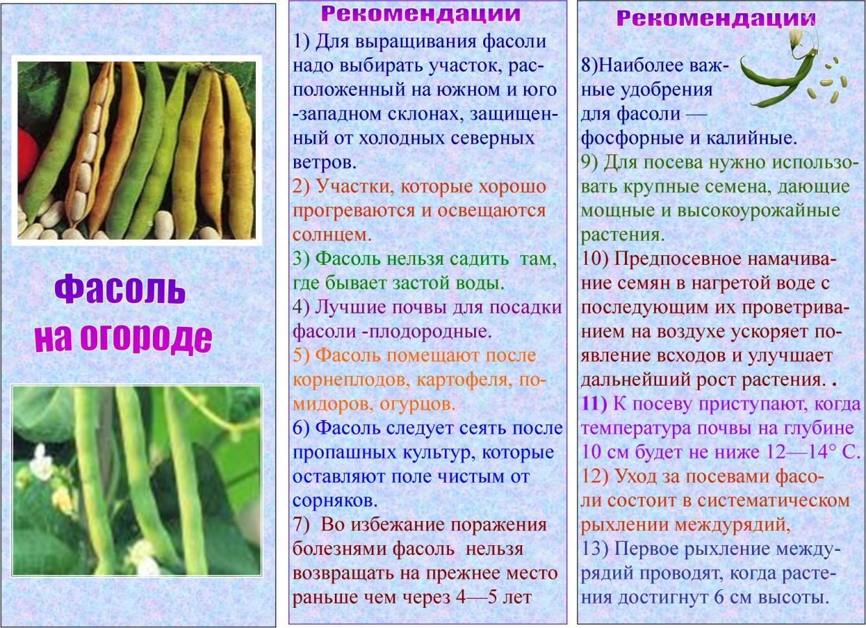 Фасоль температура выращивание 26